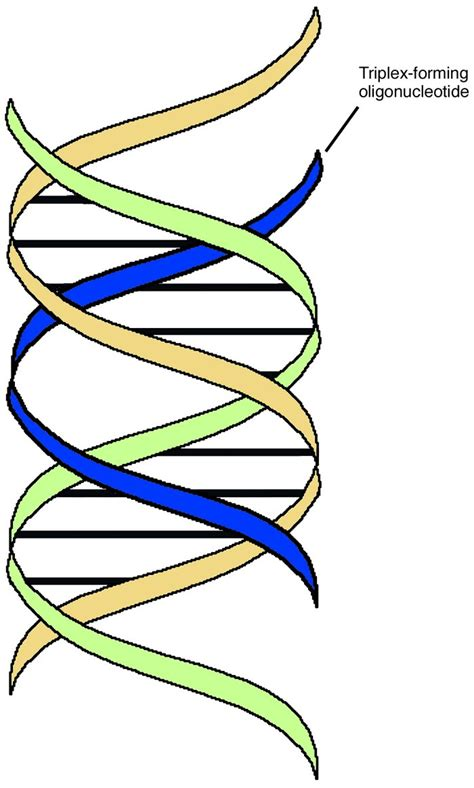 triple helix dna jci the potential for gene repair via triple helix formation