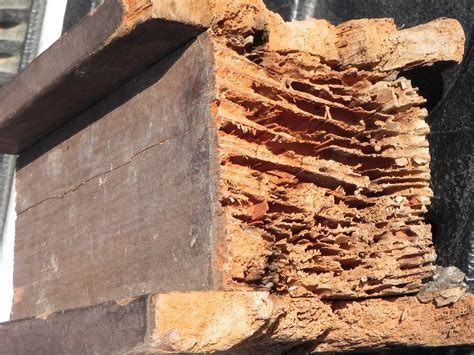 should i buy a house with termites image gallery termite damage