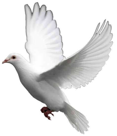 dove clipart heavenly pencil and in color dove clipart