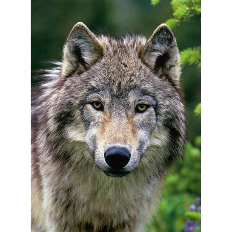 Ravensburger Wolf Portrait 500pc Puzzle   £6.32   Hamleys