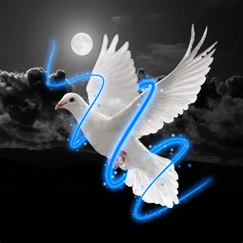 imagenes palomas blancas volando pin fotos palomas volando ajilbabcom portal pictures on