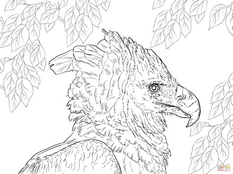 harpy eagle portrait coloring page free printable