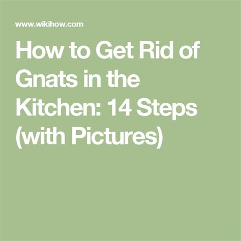 How To Get Rid Of Gnats In Kitchen And Bathroom by 25 Unique Gnats In Kitchen Ideas On Diy Gnat