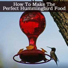 diyrectory com how to make hummingbird food