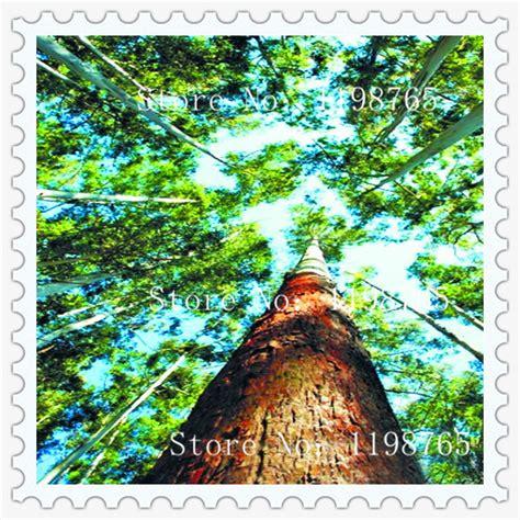 Eukalyptus Pflanze Kaufen 97 by Kaufen Gro 223 Handel Regenbogen Eukalyptus Samen Aus