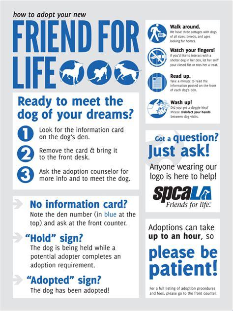 how to adopt a puppy adoption poster benton graphic designer