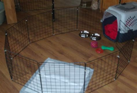 crate training crate training puppy night potty dogs our friends photo blog
