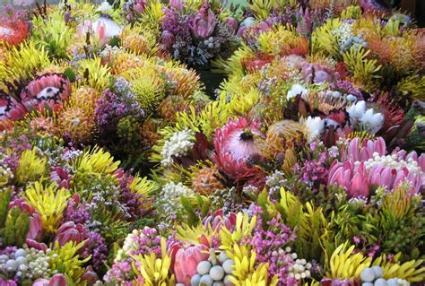 Beautiful Gardens In The World by Fynbos Botany Cape Floral Kingdom World Heritage Site