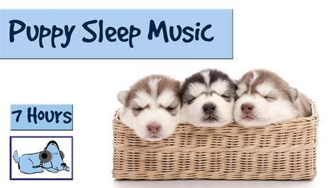 how to get a puppy to sleep help your puppy go to sleep at with this 7 hour song relax my
