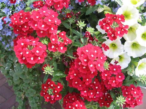 balkonpflanzen sonnig gehlhaar gartenbaumschule hannover gt pflanzen gt beet und