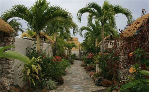 Buy Garden Plants by Buy Palm Trees Subtropical Palms Plants Nz