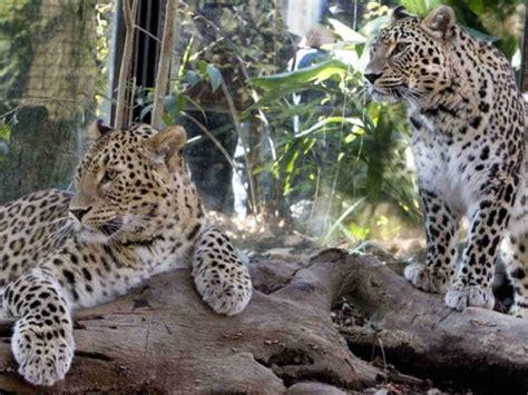 giardino zoologico roma bioparco di roma notizie dall italia italos