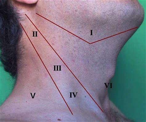 grupos ganglionares de cuello manual de cabeza y cuello