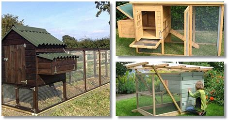Building A Chicken Coop Review Learn How To Build A
