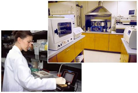 bench laboratory research dcm department of comparative medicine