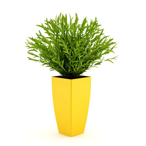 potted plants potted plant 3d model max obj fbx c4d cgtrader com