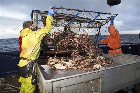 deadliest catch discovery deadliest catch faces its own extinction due to climate