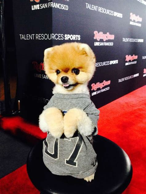 what type of is jiffpom rolling gears up with king and jiffpom sfgate