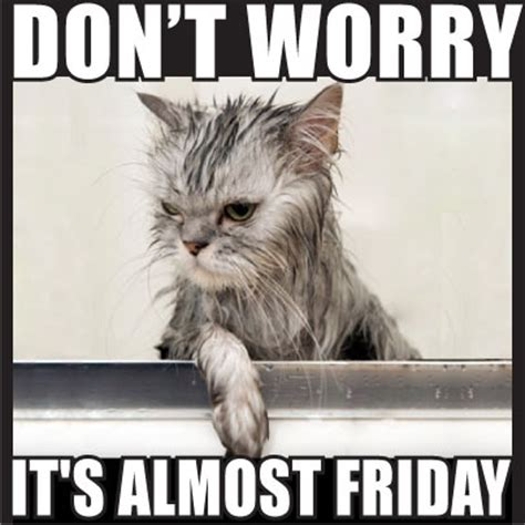 Friday Cat Meme - don t worry it s almost friday daily inspiration