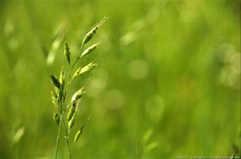 photo of herbe le de photo paysage