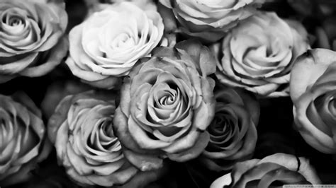 wallpaper black and white roses black and white rose wallpaper hd background 9 hd