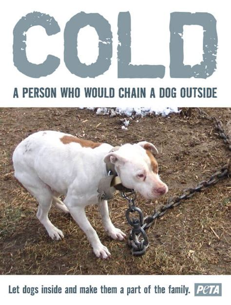 what temperature is cold for dogs 10 reasons why dogs should stay indoors in the winter and always and how you can