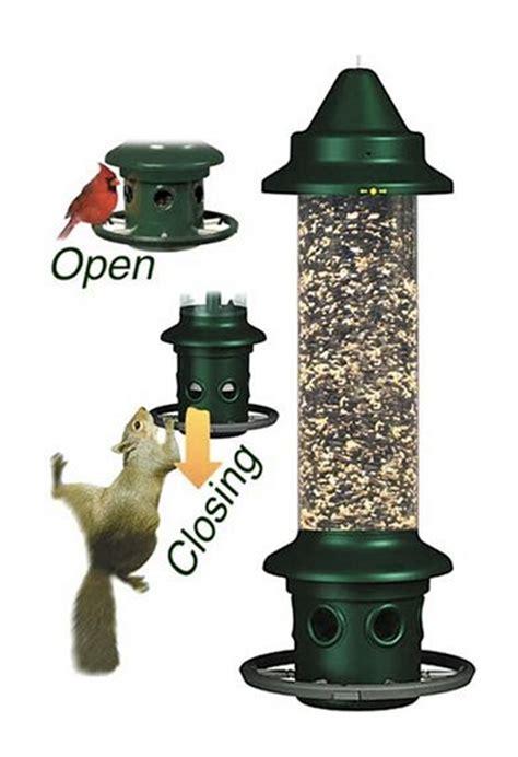 the best squirrel proof bird feeder the attic pest authority