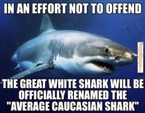 Shark Meme - animal memes even sharks get offended animal memes