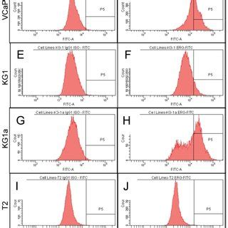 erg expression pattern expression pattern of erg protein during mouse