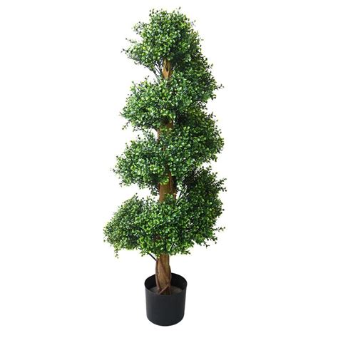 romano  ft boxwood spiral tree     home depot