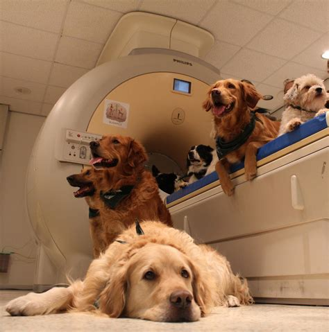 puppies puppies puppies ta brains process both what we say and how we say it study shows