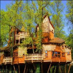 Tree Homes beautiful tree houses prime home design beautiful tree houses