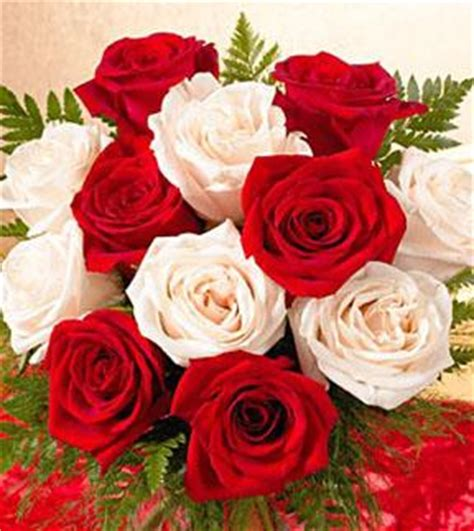 red white and pink roses pictures to pin on pinterest 1 dozen favorite red and white roses wrapped f231