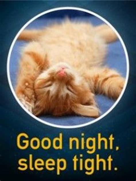 Good Night Meme - 25 best ideas about good night meme on pinterest