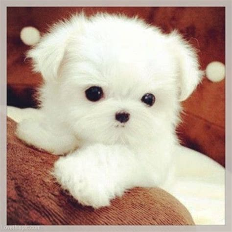 best puppy for baby 25 best ideas about white puppies on baby dogs fluffy puppies and