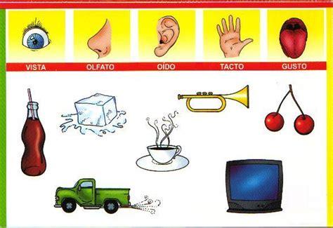 imagenes educativas los sentidos material did 225 ctico el curpo y los 243 rganos de los sentidos