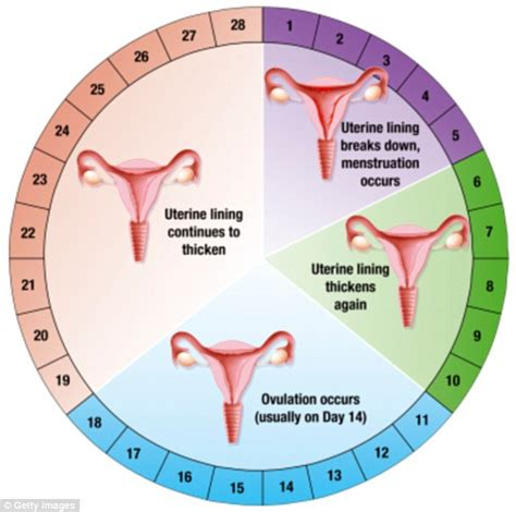 What YOU should eat on your period | Daily Mail Online Female Period Cycle
