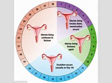What YOU should eat on your period   Daily Mail Online Female Period Cycle