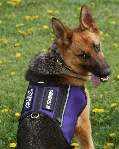 service vest for dogs 41 best images about service vests on
