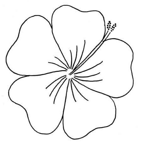 free printable tropical flowers hibiscus outline clipart best