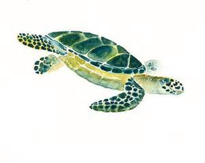 97 best images about watercolor fish turtles lizards on watercolor print conch