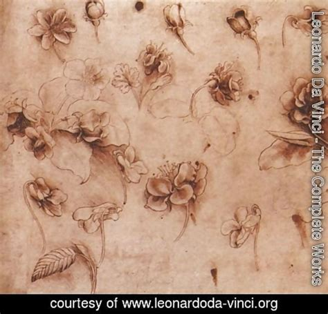leonardo da vinci complete biography leonardo da vinci the complete works flower studies