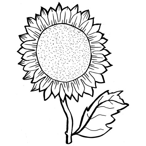 sunflower coloring pages with colored picture exle