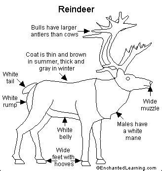 printable reindeer parts reindeer printout enchantedlearning com