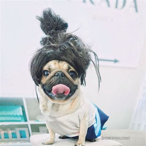 hair pug 190 best images about makes me laugh on birthday pug guns n roses and pug