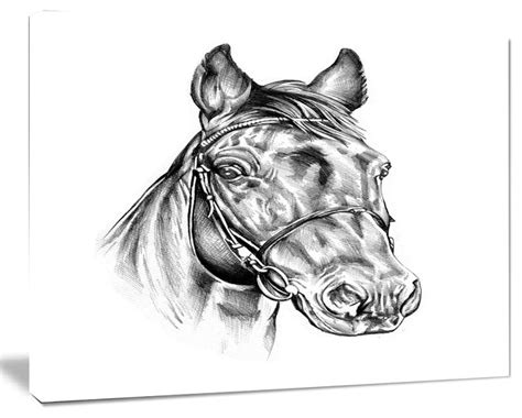 Animal Canvas Pencil freehand pencil drawing animal canvas