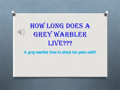 great grey warbler facts