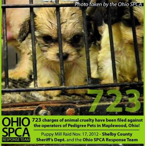 ohio puppy rescue owners of ohio puppy mill plead not guilty to 723 charges of animal cruelty