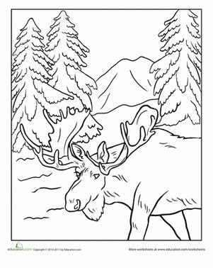 coloring pages nature animals alaska moose worksheet education com