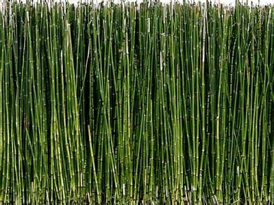 Landscape Fabric Horsetail 27 Best Images About Sushi Joint On Planters